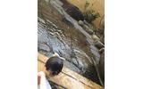 セキュリティ・シンポジウムに温泉は欠かせない。道後、白浜、そして秋は越後湯沢だよ。露天風呂最高!混浴じゃないよ!の画像
